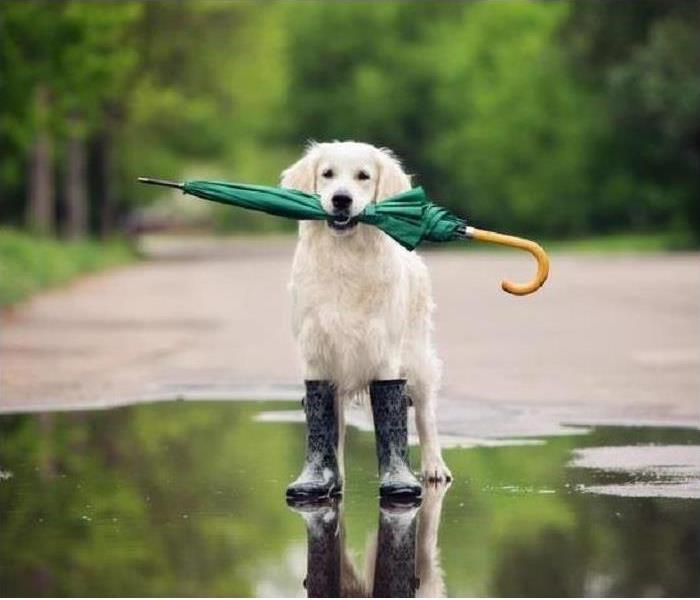 Storm Damage Pet Safety In An Emergency